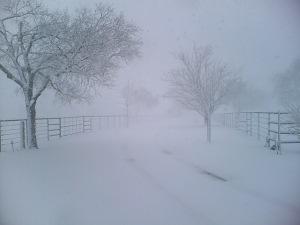 Snow_Storm_by_Vanilla105